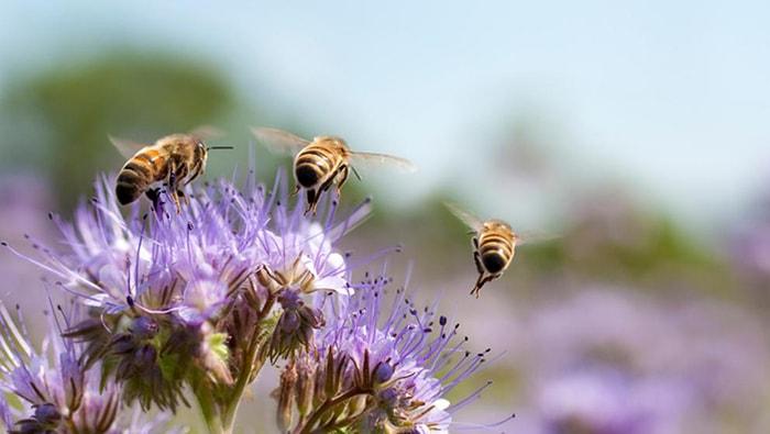 Las abejas y su importancia en el mundo - 6