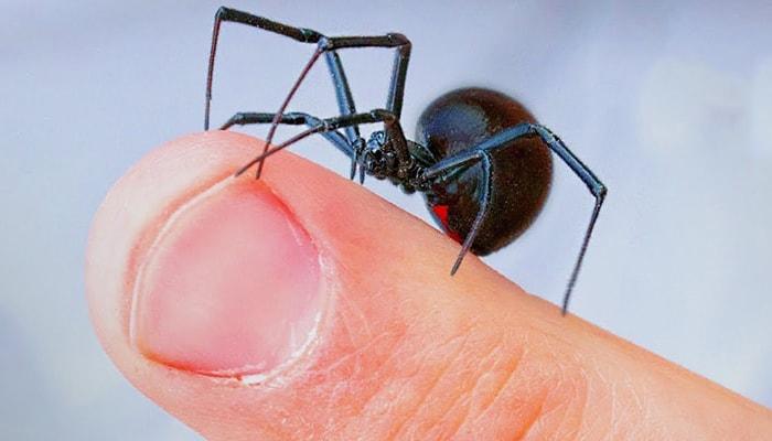 Los 6 animales más peligrosos del mundo - 2