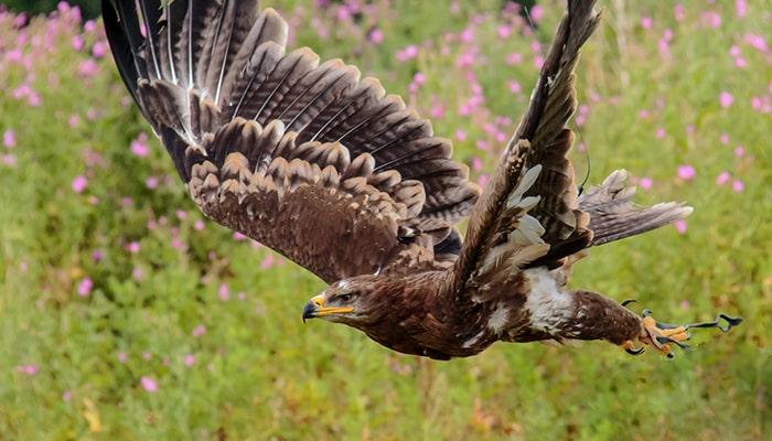 Águila: El señor del cielo - 1