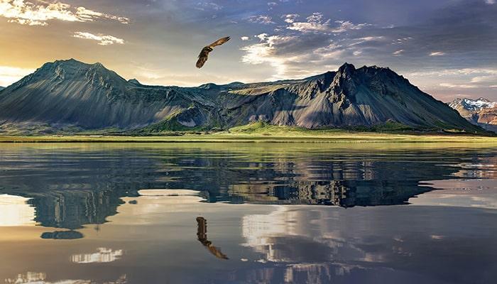 Águila: El señor del cielo - 7
