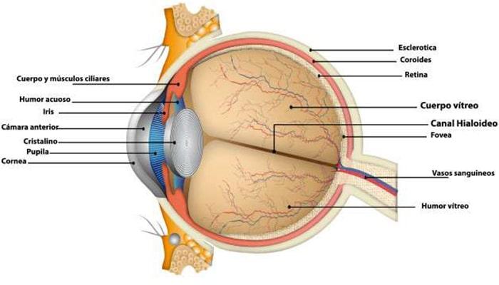 La increíble evolución del ojo - 5