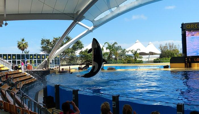 Las Orcas: ballenas asesinas - 7