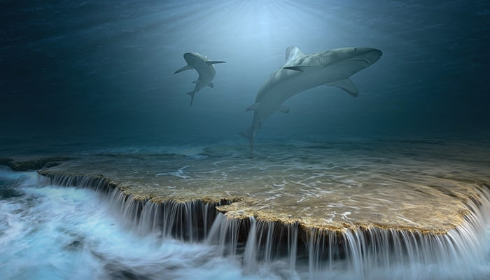 Tiburones: Uno de los animales más antiguos - 1