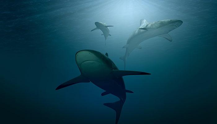 Tiburones: Uno de los animales más antiguos - 2