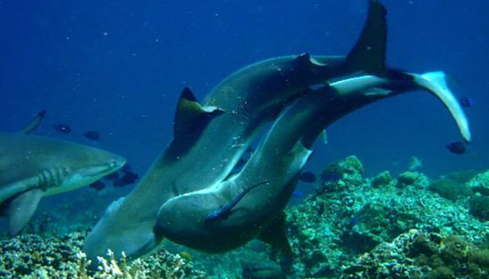 Tiburones: Uno de los animales más antiguos - 5