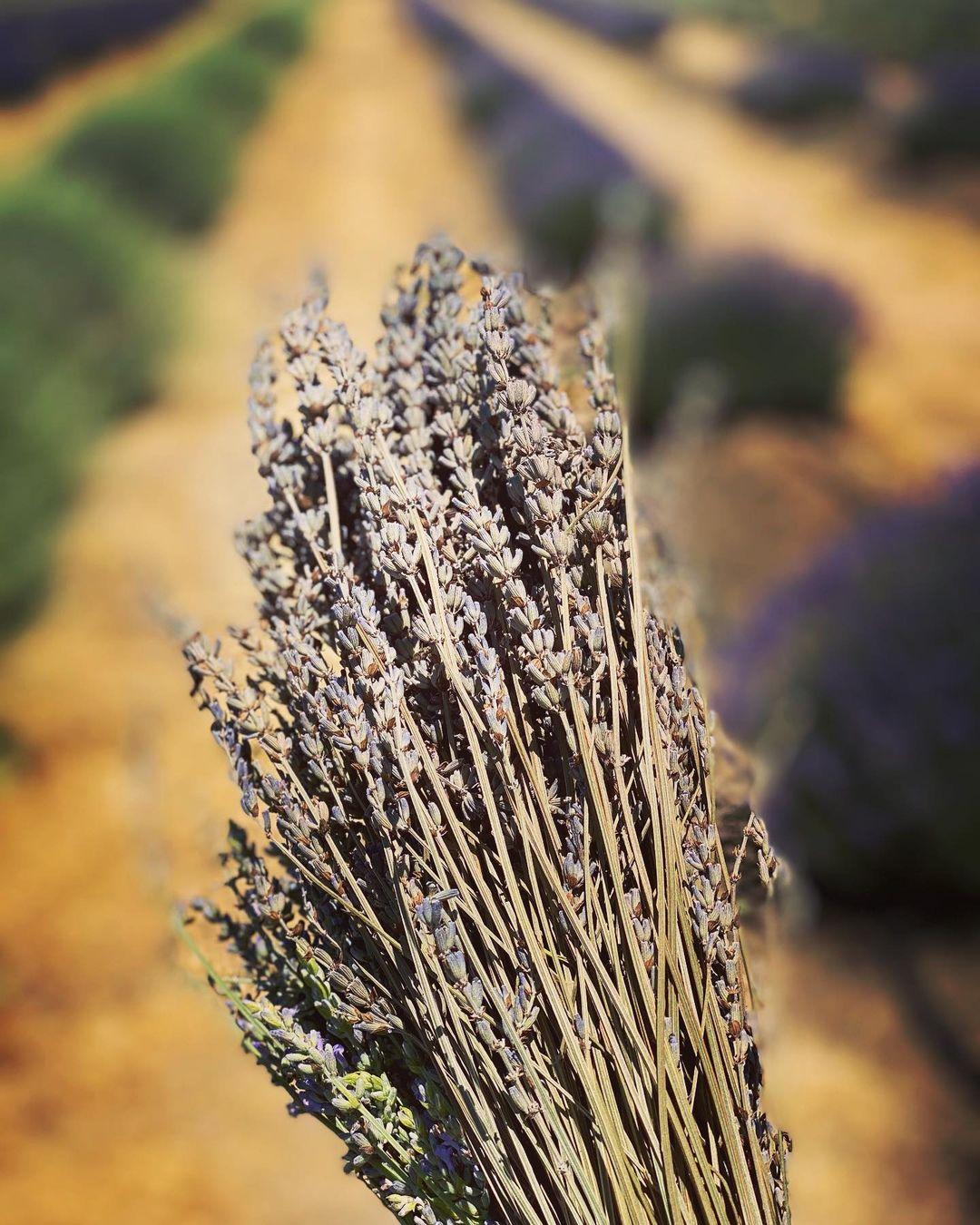 夏日的紫色薰衣草周末💜 图3