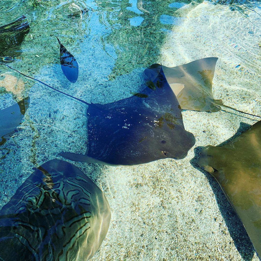 去Aquarium of the Pacific看我最喜欢的海獭🦦 图8