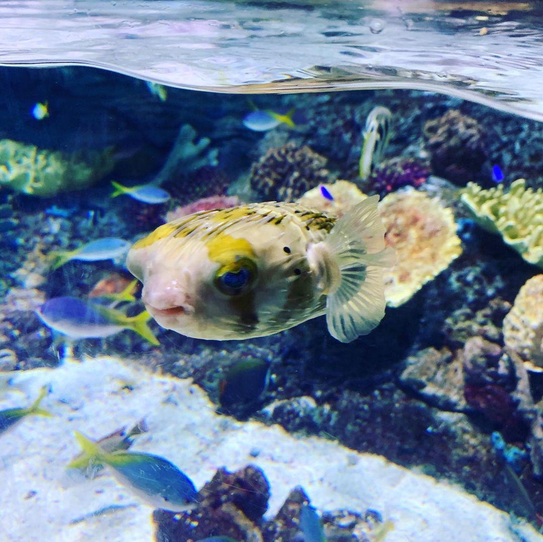 去Aquarium of the Pacific看我最喜欢的海獭🦦 图2