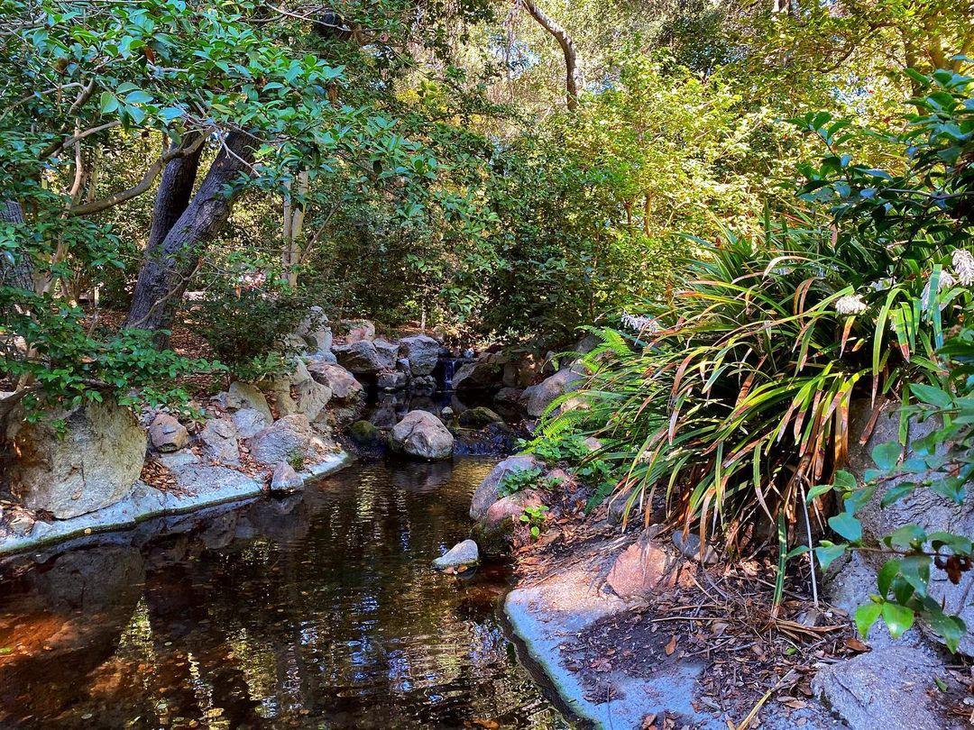 花园打卡|LA超美的小众花园🌹 图1