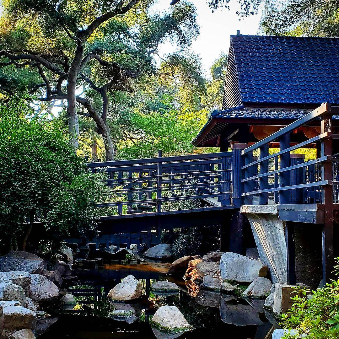 花园打卡|LA超美的小众花园🌹 图2