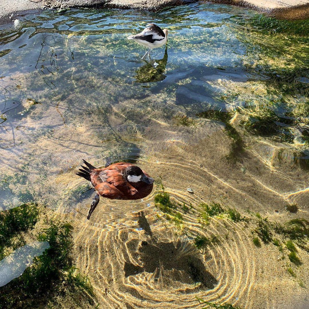 去Aquarium of the Pacific看我最喜欢的海獭🦦 图5