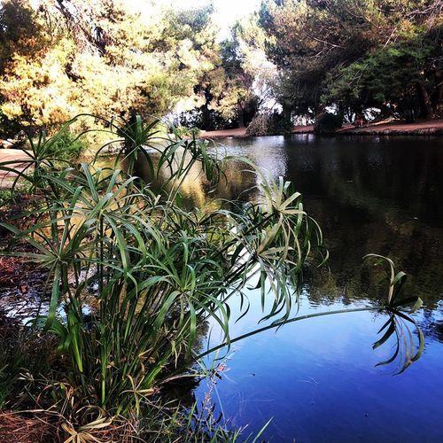 洛杉矶旅游| Debs Park | 市区爬山好去处 图2
