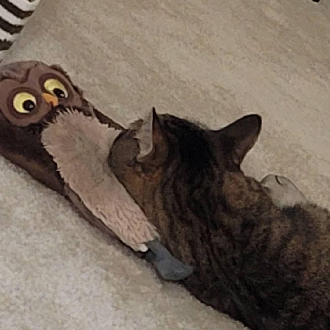 呼噜噜~欢迎各位猫猫来圈~