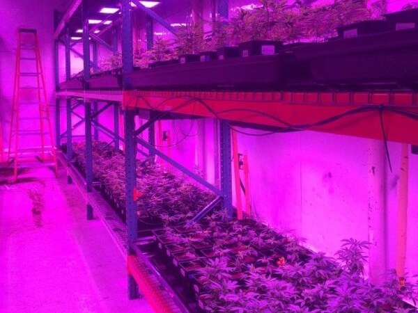 cultivation-with-tfo-llc-