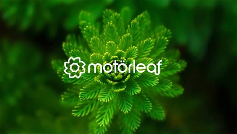 growers-spotlight-motorleafs-vision-for-ai-in-grow