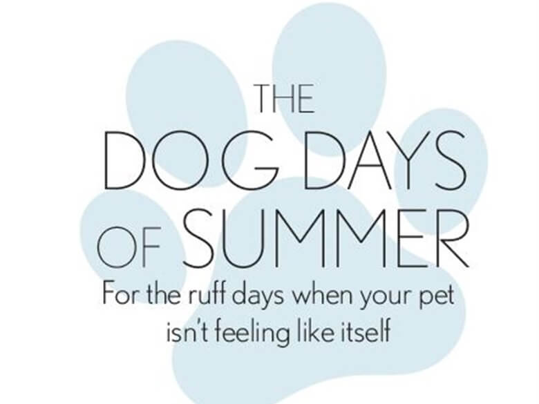 the-dog-days-of-summer-