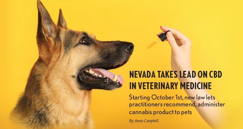 nevada-takes-lead-on-cbd-in-veterinary-medicine