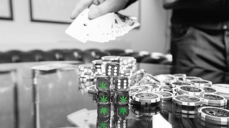 rolling-the-dice-on-medicinal-cannabis