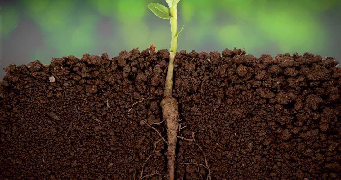 taking-root