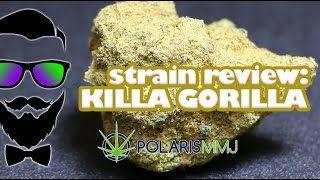 young-fashioned-strain-review-killa-gorilla-by-pol