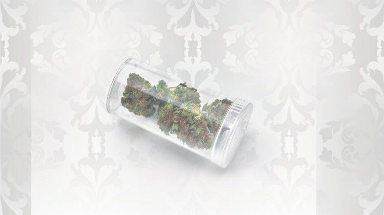 a-yendica-for-indica