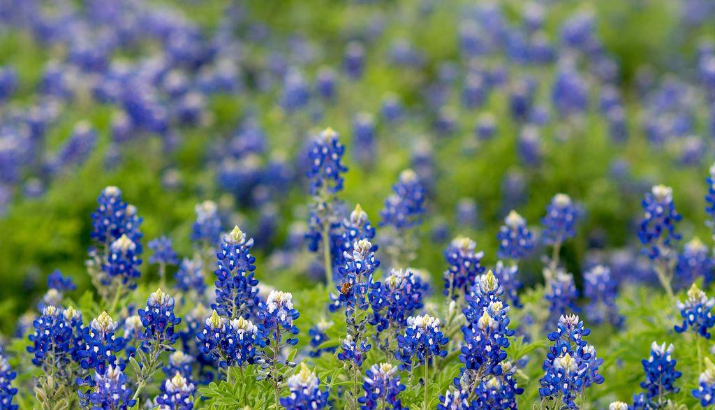 Keller-Texas