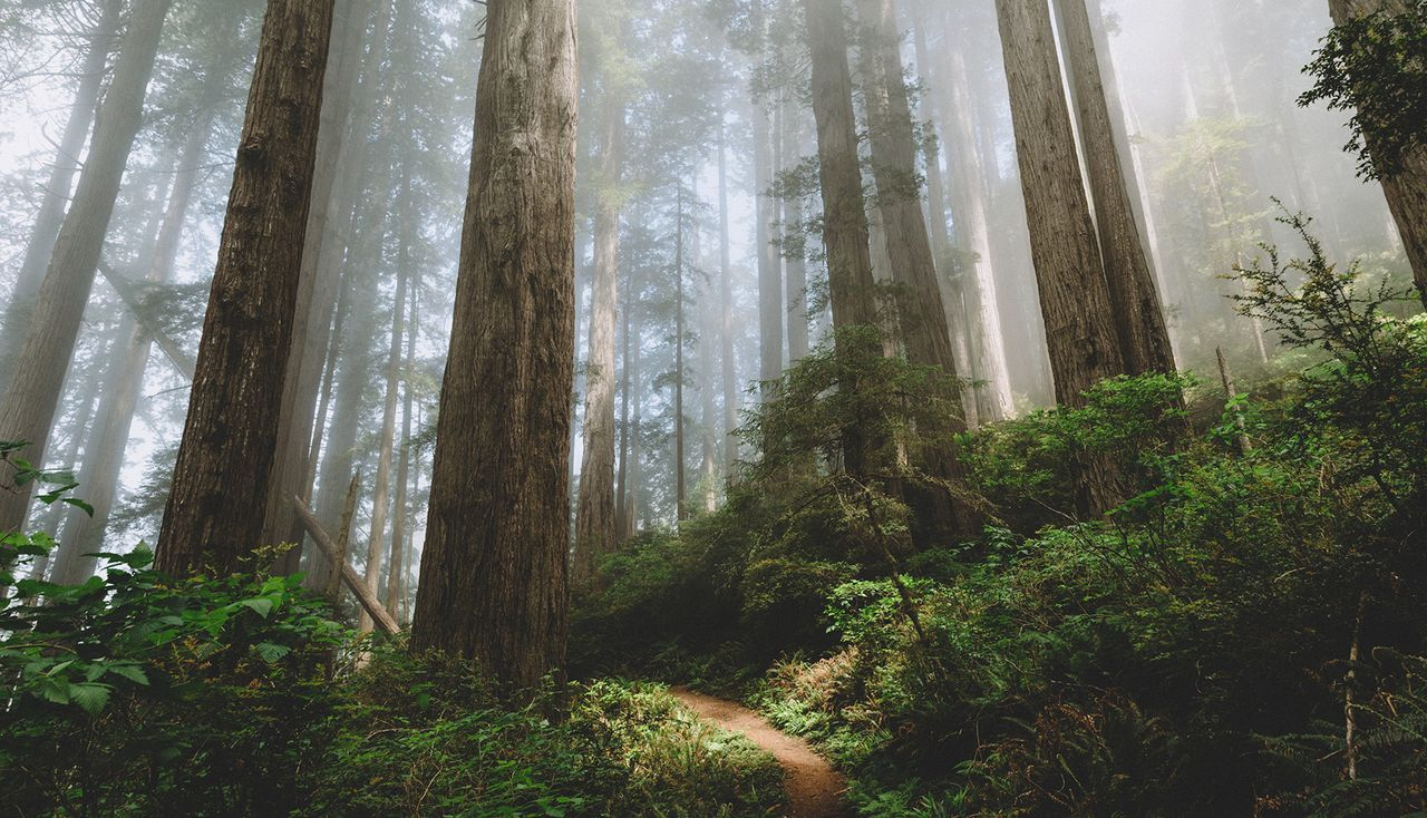 Rimforest-California