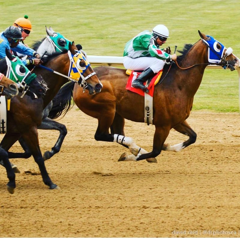 Friday Horse Racing Live!!   Place your Bets!!