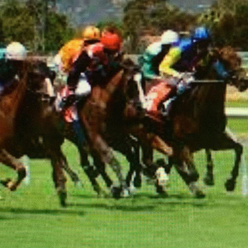 Sunday Horse Racing !!!