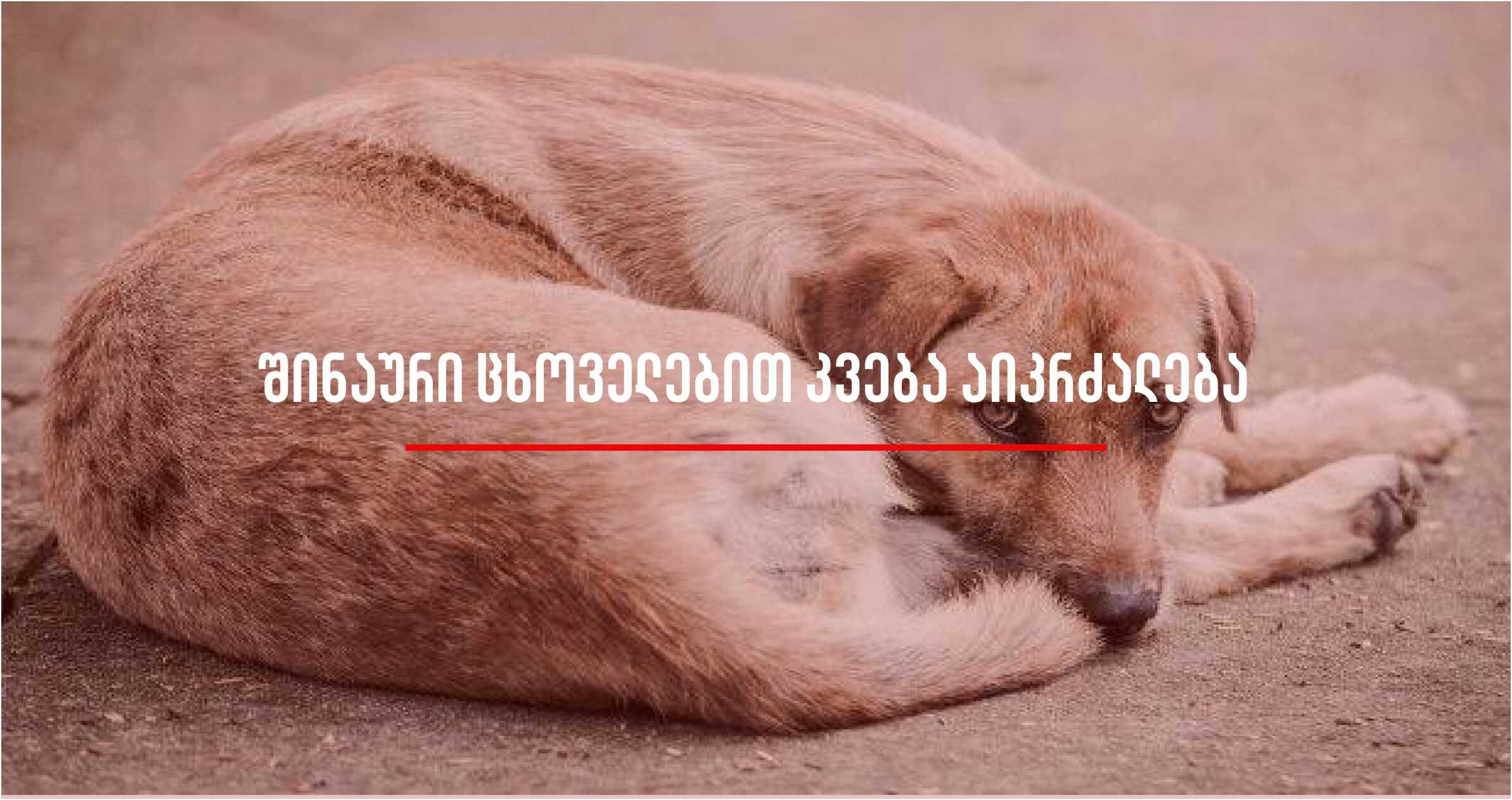 შენჟენში კატებისა და ძაღლების საკვებად გამოყენება აიკრძალება