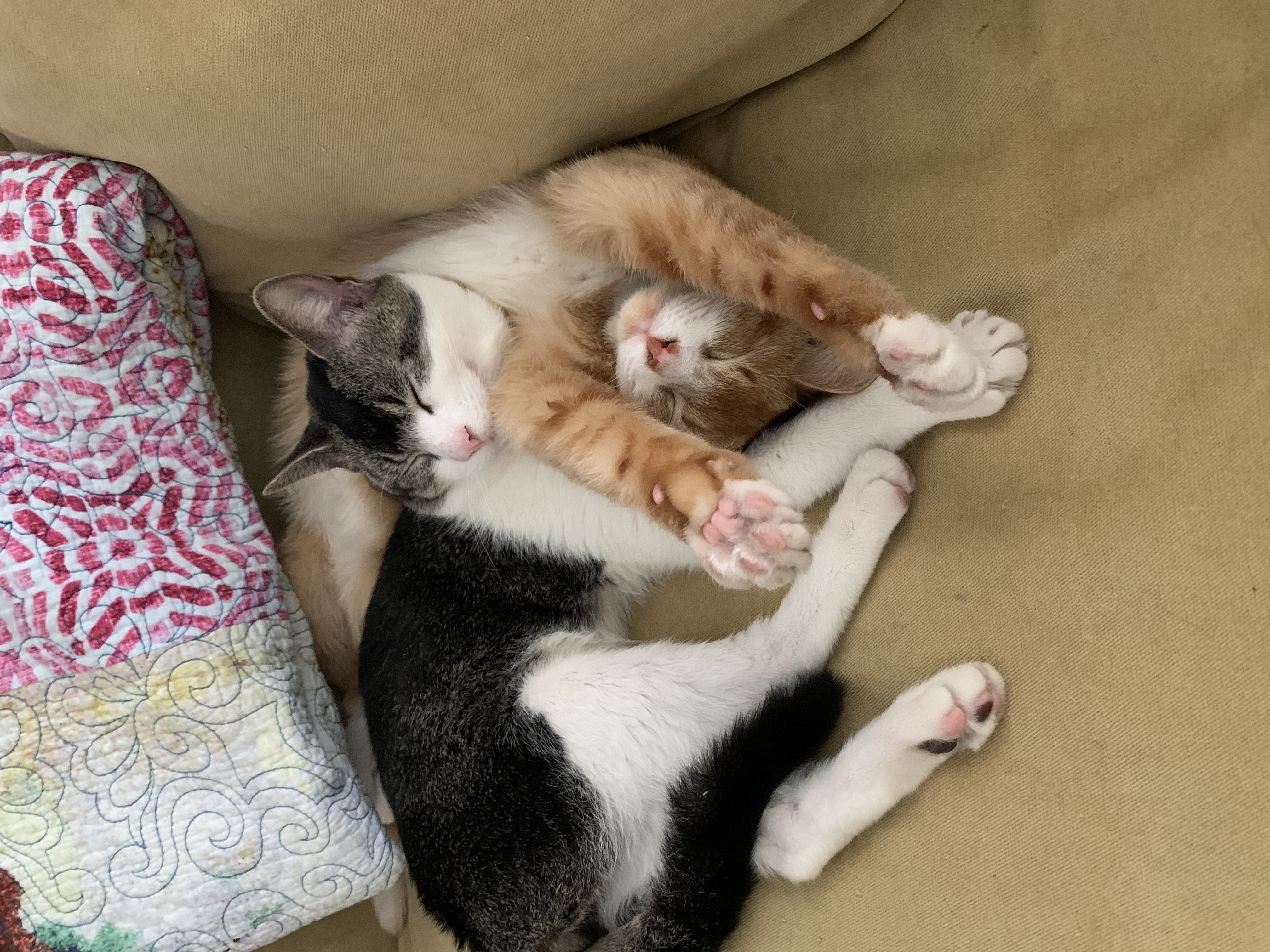 a picture of Georgie and Luda a cat that needs a foster home.