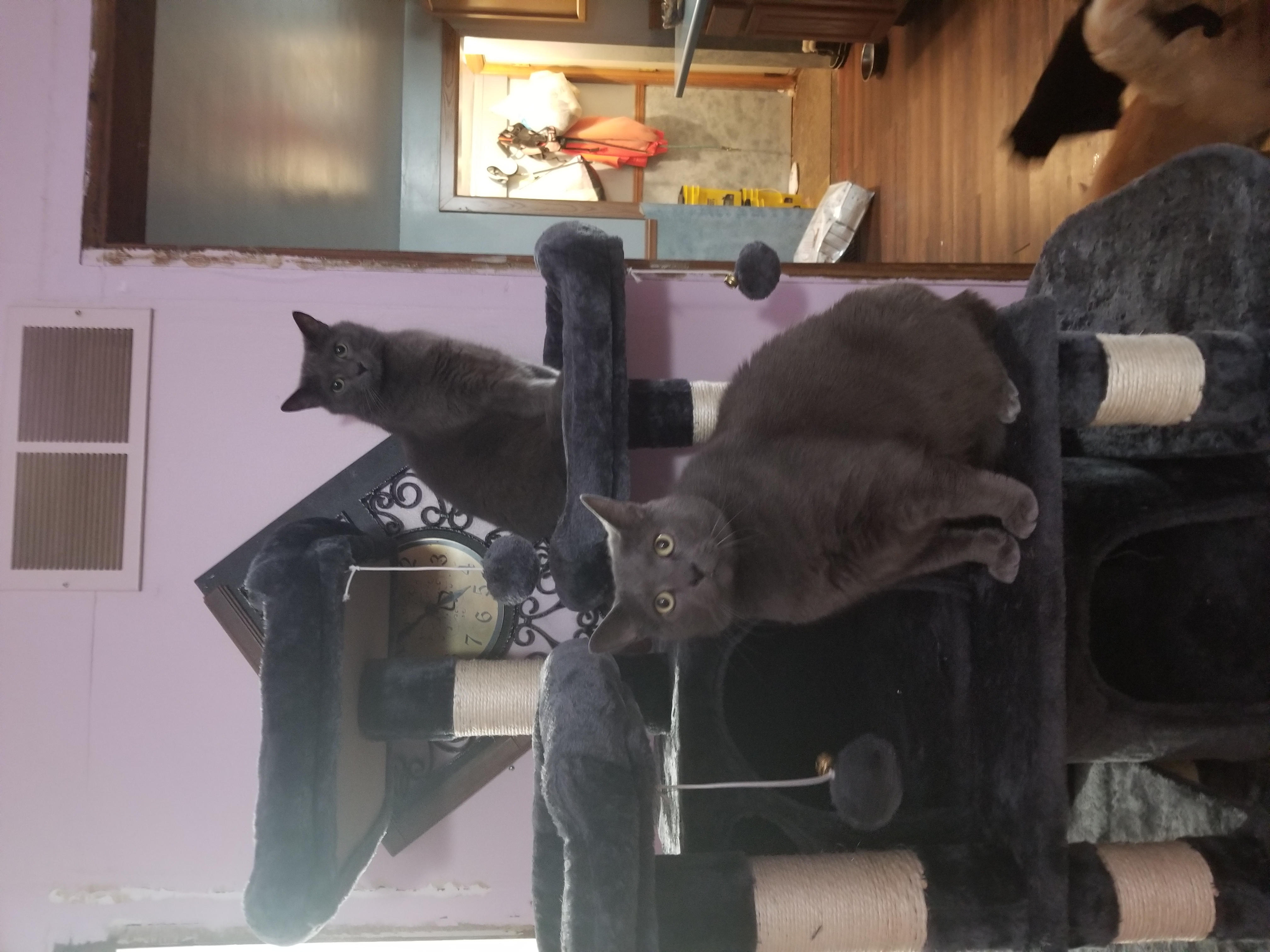 a picture of Salem, Lilly, Rainy, Princess Buttercup, Skyler, Niko a cat that needs a foster home.