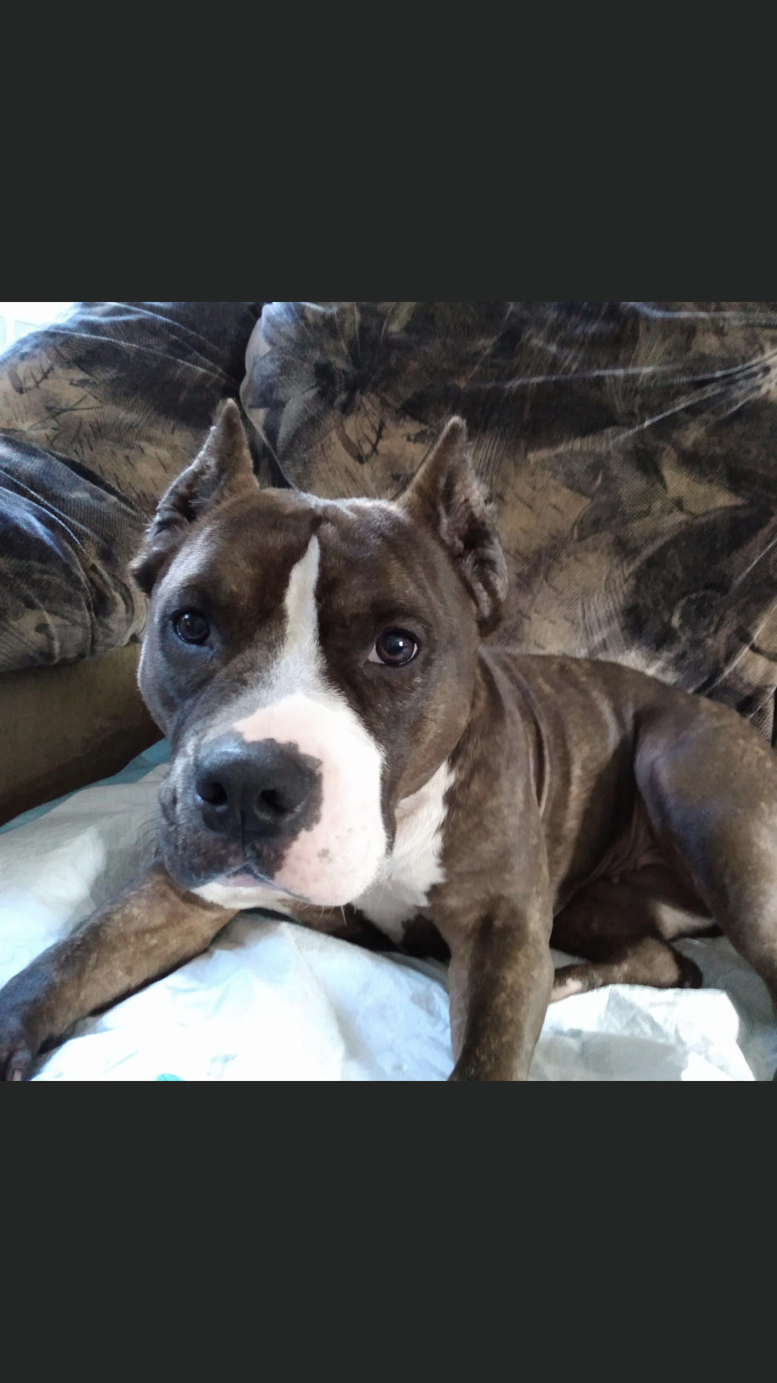 a picture of Lola a dog that needs a foster home.