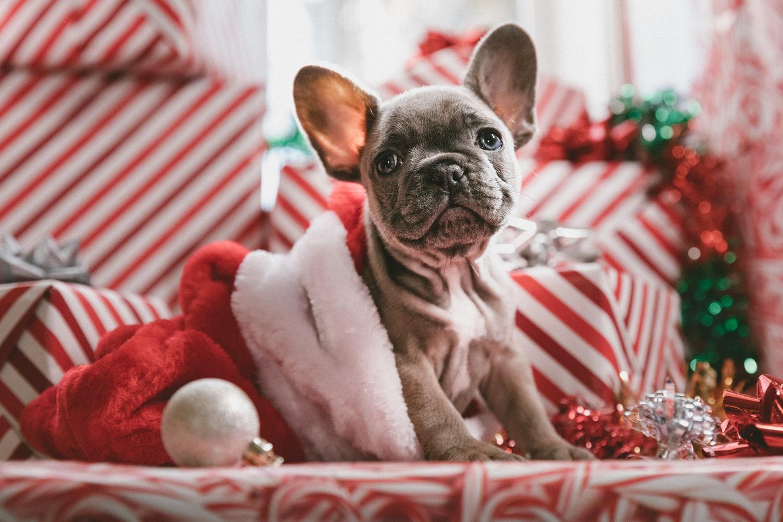 45 Holiday Movies to Watch on Hulu this Season