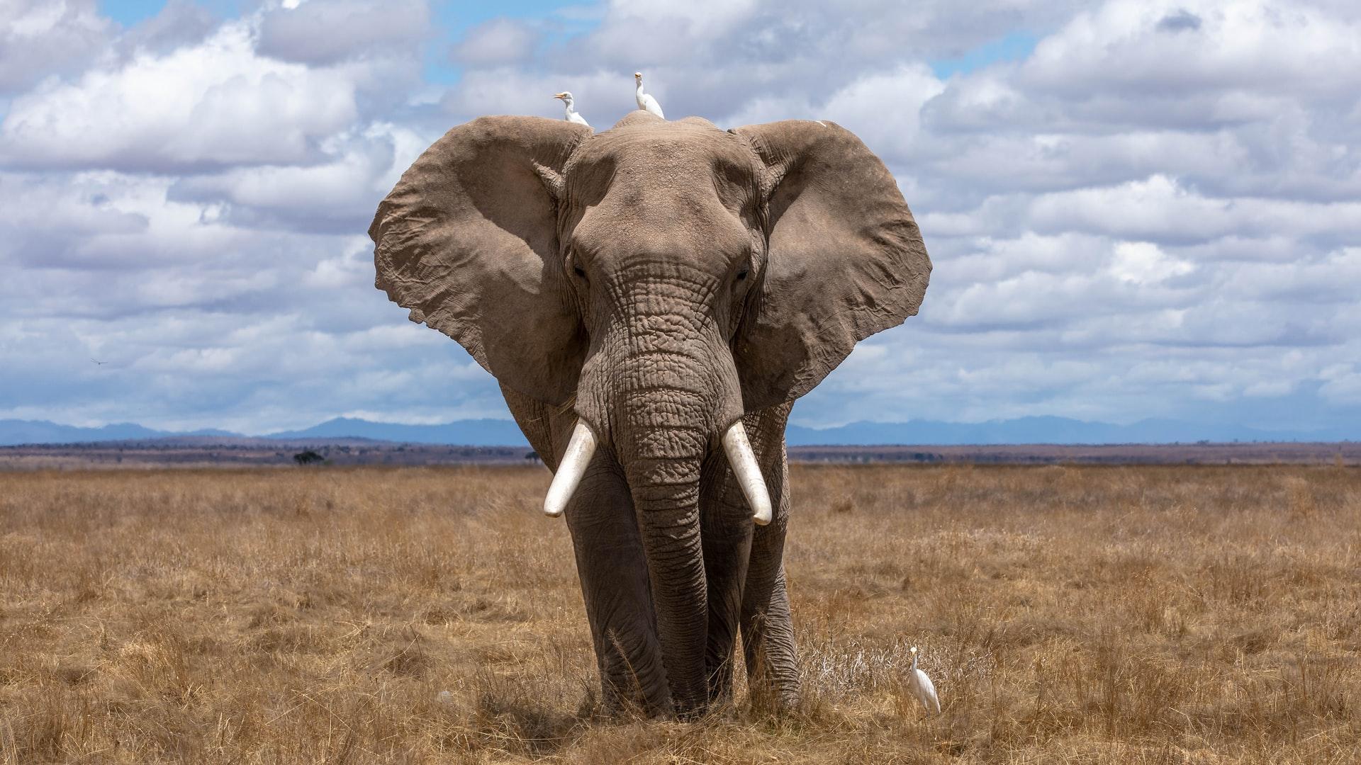 8 Stirring Books Like Water for Elephants