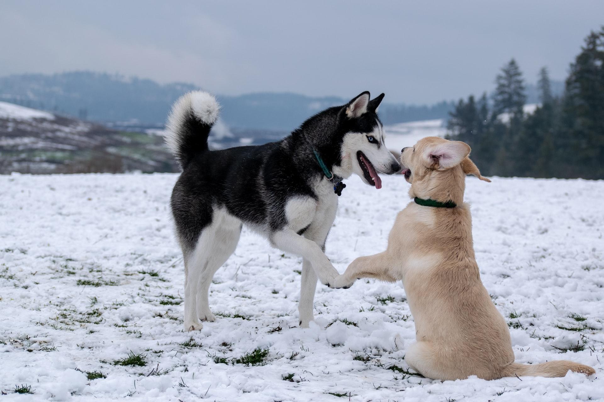 The Best Doggo Movies