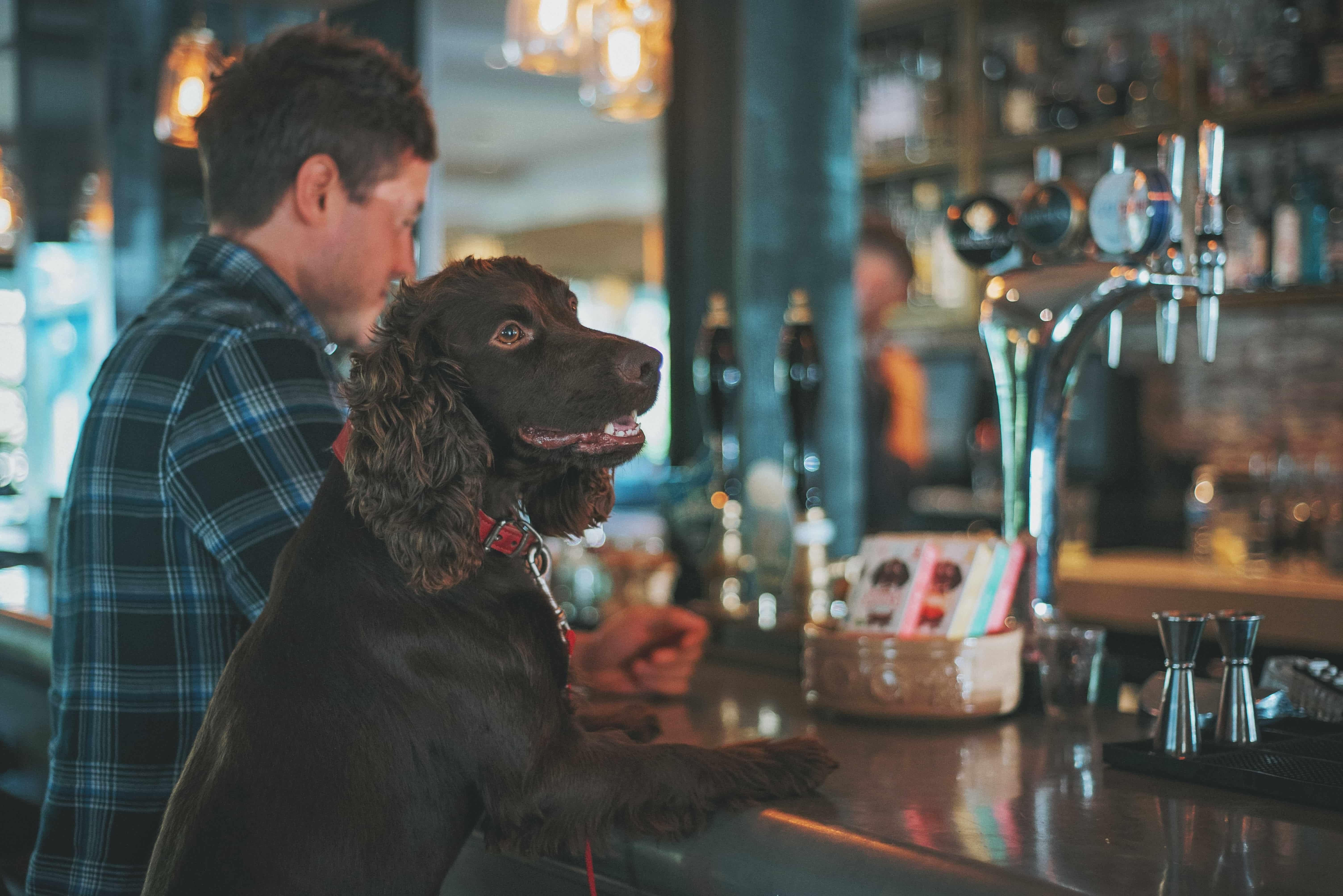 Dog Friendly Bars in Birmingham