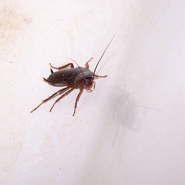 Kackerlackor hittades i köket på Lion Bar i Gävle