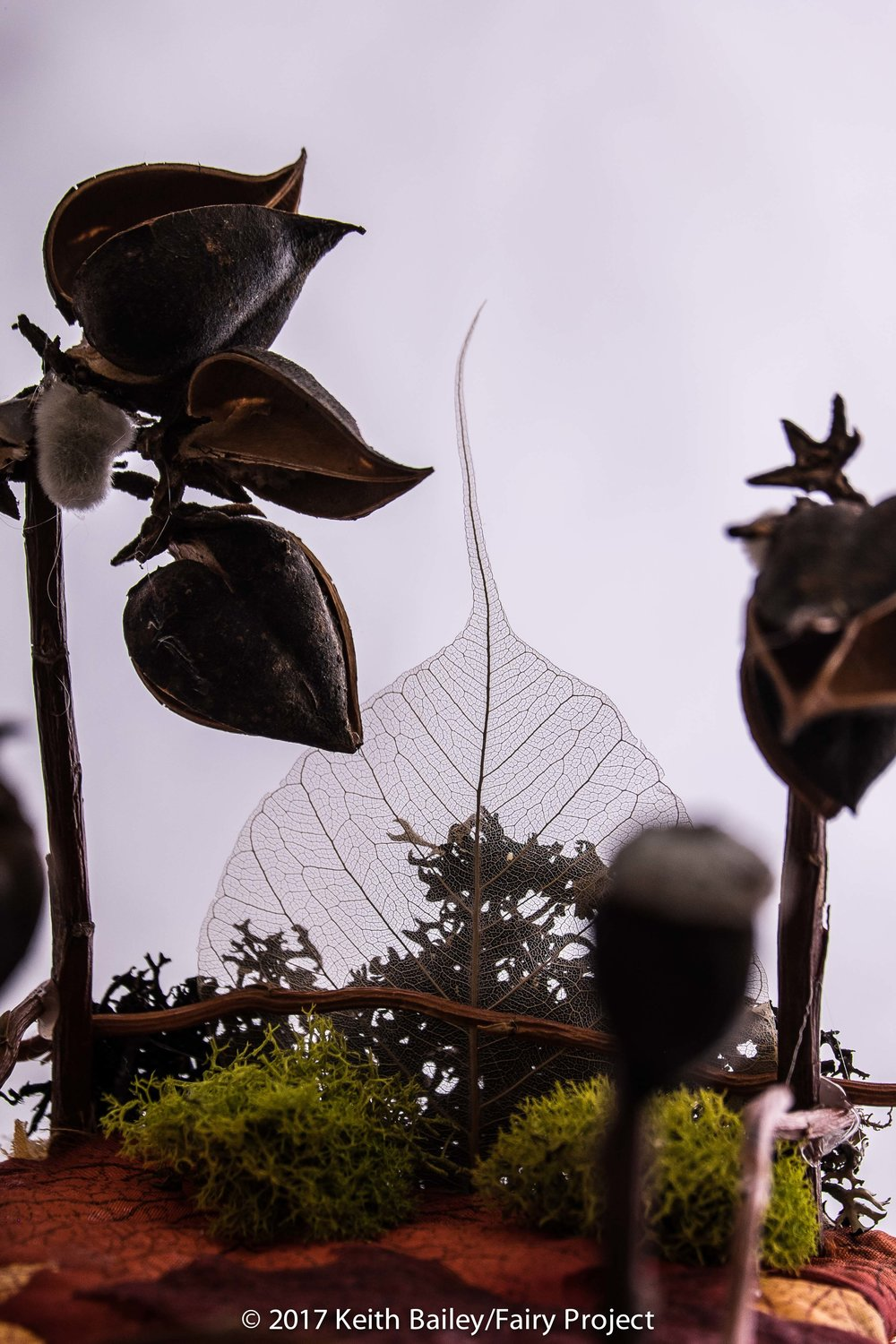 The Fairy Project - Seed Pod