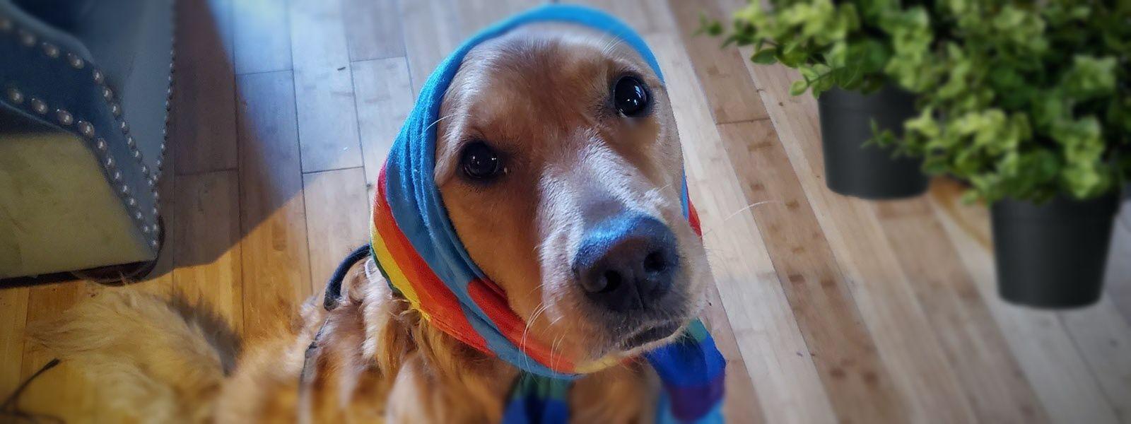 /trump-era-politics-took-my-dogs-best-friend-893n3w82 feature image
