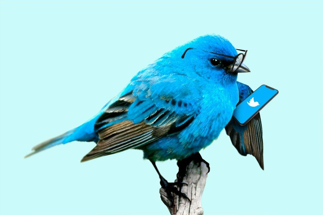 /social-engineering-and-the-great-twitter-hack-of-2020-xpdb3t3i feature image