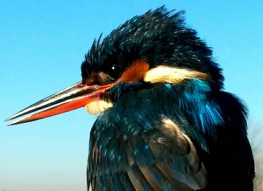 Be wild & travel en Hamelin: Observación de Aves - Actividad  (Madrid)