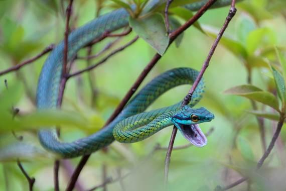 Zcarlosmaria en Hamelin: Fauna y Flora Argentina - Actividad  (Ciudad de Buenos Aires)