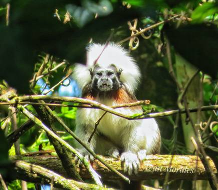 ivandariovertel.97 en Hamelin: Fauna