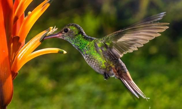 Olguin.jao en Hamelin: Fauna  (Tres Valles), #Aves21