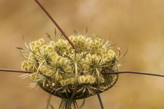 Inmaculadavillegas en Hamelin: Flora