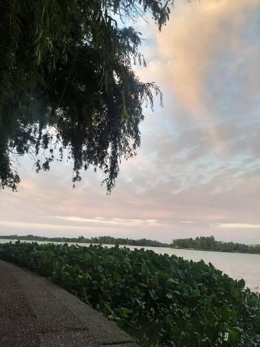 Juarezludmila49 en Hamelin: Flora  (Zárate), #arbol #hoja #río #nube