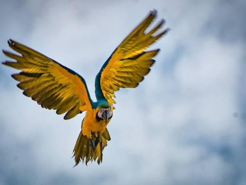 José Viana en Hamelin: Fauna  (Caracas), #ave #guacamaya #avetropical #coloryvida #vuelo