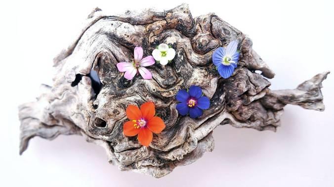 Mararuizasensio en Hamelin: Flora  (Júzcar), #flora21 #macro #flores #flora #flowers #huaweiphotography #p30pro #huaweiphotographers #tronco