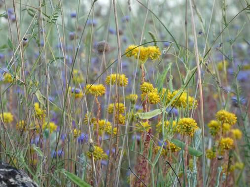 mariale en Hamelin: Flora, 📸 #marialemdza Provincia de Zamora, primavera 2021. #Naturaleza #flores #floressilvestres #BellezaNatural  #Naturaleza #Parque...